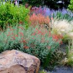 Item 29 - Landscape Plants For Your Garden