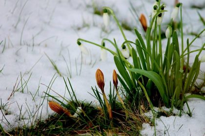 Melting snow and new flowers 2018-03-01